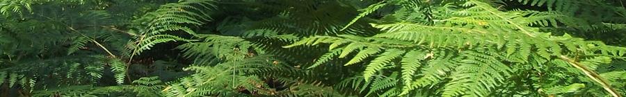 Les Jardins d'Oumaï